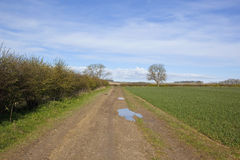 Muddy yorkshire wolds farm track in springtime Royalty Free Stock Images