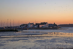 Mudeford Quay at Sunset. Seaguls bathing in the Harbour Stream Royalty Free Stock Image