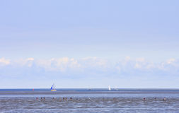 Mudflat walking in Waddensea, Moddergat, Holland Royalty Free Stock Image