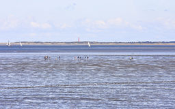 Mudflat walking, Waddensea, Moddergat, Holland Stock Photography