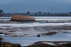Mudflats à la baie de trous dans Dorset photos libres de droits