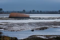 Mudflats на заливе отверстий в Дорсете стоковые фотографии rf