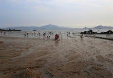 Mudflats стоковые изображения