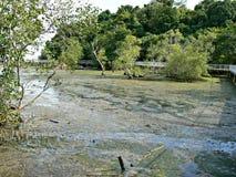 Mudflats, Chek Jawa Photos stock
