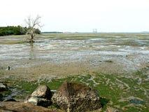 Mudflats de Chek Jawa Photo libre de droits