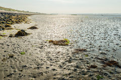 Mudflats of a Dutch estuary at low tide Stock Image