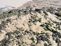 Mudflats ed alga Fotografie Stock Libere da Diritti