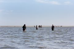 Mudflats during a tour of Nature to the Wadden Islands Stock Images