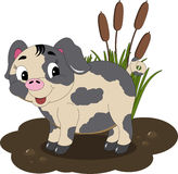 Mudhole Pig Royalty Free Stock Photo