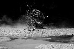 mudpöl Arkivfoto