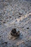 Mudpot in Rotorua Stock Photo