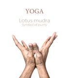 Mudra de lotus de yoga Image stock