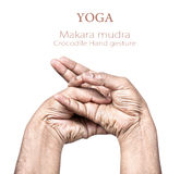 Mudra de Makara Photographie stock libre de droits