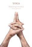 Mudra de Matangi da ioga imagem de stock