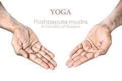Mudra de Pushpaputa de yoga Photos stock