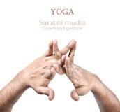 Mudra Surabhi στοκ εικόνες