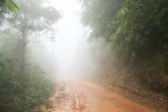 Mudroad in rainforest form thailand Stock Photo