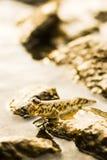 Mudskipper Imagenes de archivo