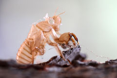 Mue d'insecte sur l'arbre Photos stock