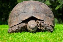 Mueca de la tortuga Imágenes de archivo libres de regalías