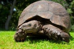 Mueca de la tortuga Fotos de archivo