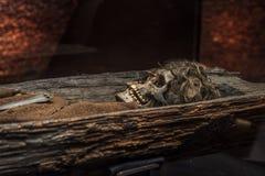 Mueca del cráneo Fotos de archivo