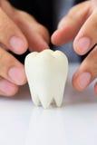 Muela, concepto dental Fotos de archivo libres de regalías