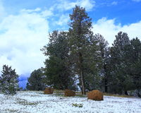 Mueller-park, Colorado Royalty-vrije Stock Foto's
