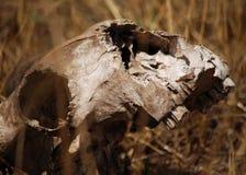 muerte Foto de archivo libre de regalías
