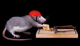 Muerte de engaño de la rata Fotografía de archivo libre de regalías