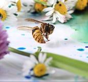 Muerte de la naturaleza Fotografía de archivo libre de regalías