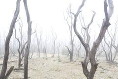 Muerte del bosque, sequía, fuego, el warmning global Imagen de archivo libre de regalías