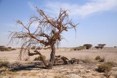 Muerte en desierto. Fotos de archivo libres de regalías