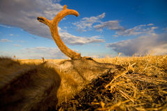 Muerte en la pradera Foto de archivo libre de regalías