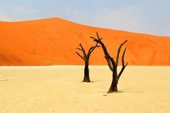 Muerte Vlei - Namibia África imagen de archivo