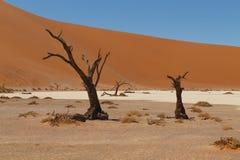 Muerte Vlei ocultado árbol Imagen de archivo