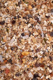 Muesli cereal with seeds, mixed fruit and nuts background Stock Photo