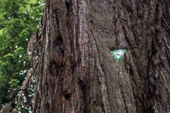 Muestra alemana Naturdenkmal que significa el monumento natural en árbol gigantesco antiguo y gigante viejo en bosque del Estado  Fotos de archivo