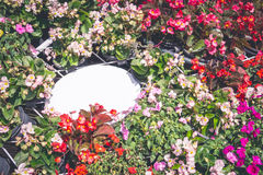 Muestra blanca en blanco en la flor Foto de archivo