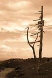 Muestra de camino artística Imagen de archivo libre de regalías