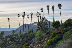 Muestra de Hollywood rodeada con las palmeras en el soporte Hollywood en la puesta del sol imagen de archivo libre de regalías