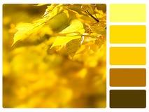 Muestra de la paleta de color. fotos de archivo