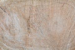 Muestra de la textura del roble, visión interior en el corte, a través de la visión, estructura del roble, madera dura foto de archivo