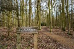 Muestra de madera de Bridlepath vista adyacente a una trayectoria despejada en un bosque Imagen de archivo libre de regalías