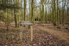 Muestra de madera de Bridlepath vista adyacente a una trayectoria despejada en un bosque Fotos de archivo libres de regalías