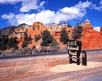 Muestra del bosque, Dixie National Forest, Utah. imagenes de archivo