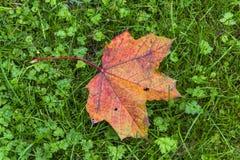 Muestra del otoño Fotografía de archivo libre de regalías