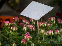 Muestra en blanco entre las rosas Imagen de archivo libre de regalías