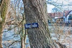 Muestra en un árbol Fotos de archivo