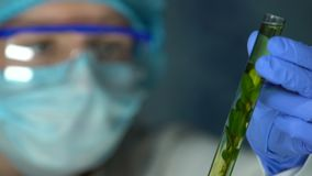 Muestra femenina de la planta de la tenencia del experto del laboratorio en el tubo de ensayo, influencia de los pesticidas almacen de video